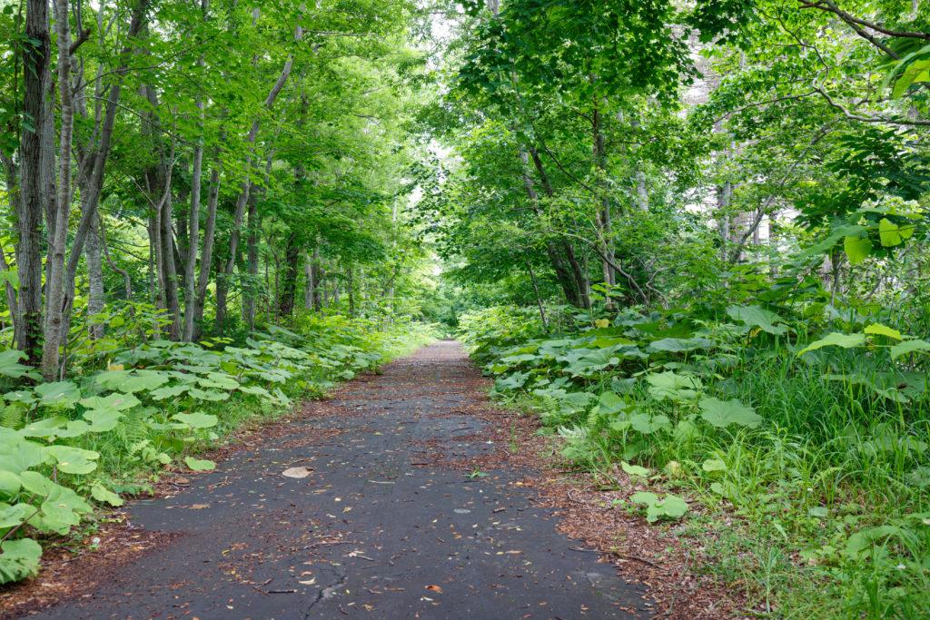 支笏湖のサイクリングロード