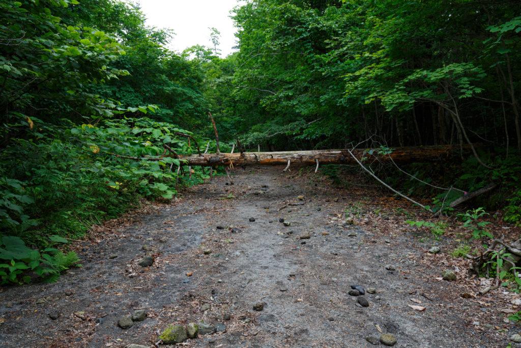 苔の回廊までの道中