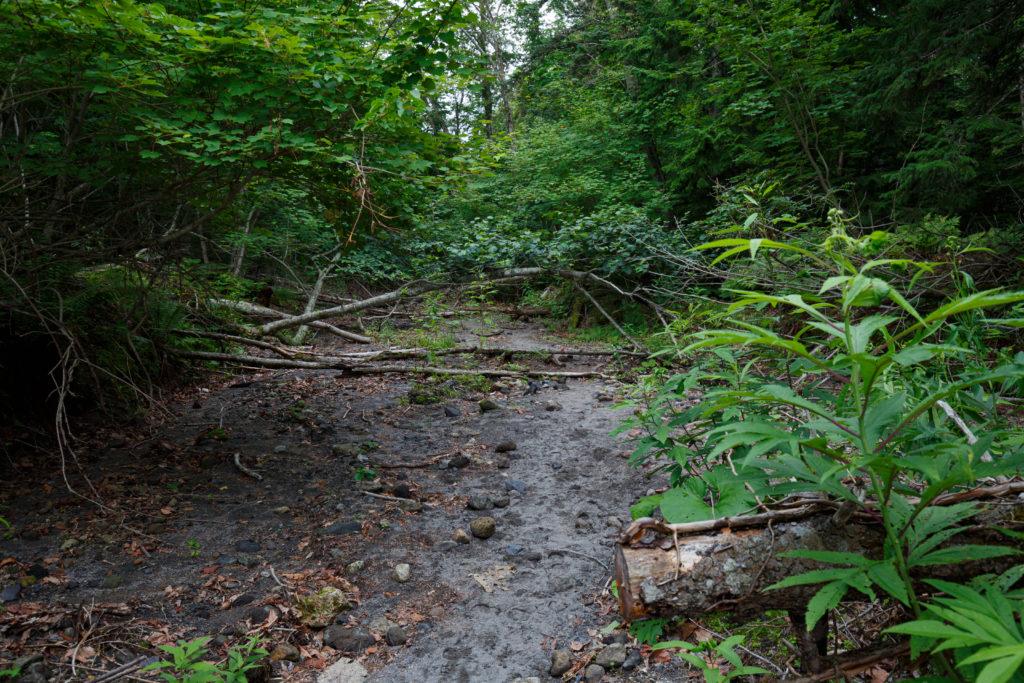 苔の回廊への道中