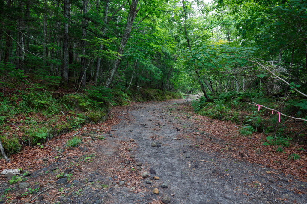苔の回廊の道中