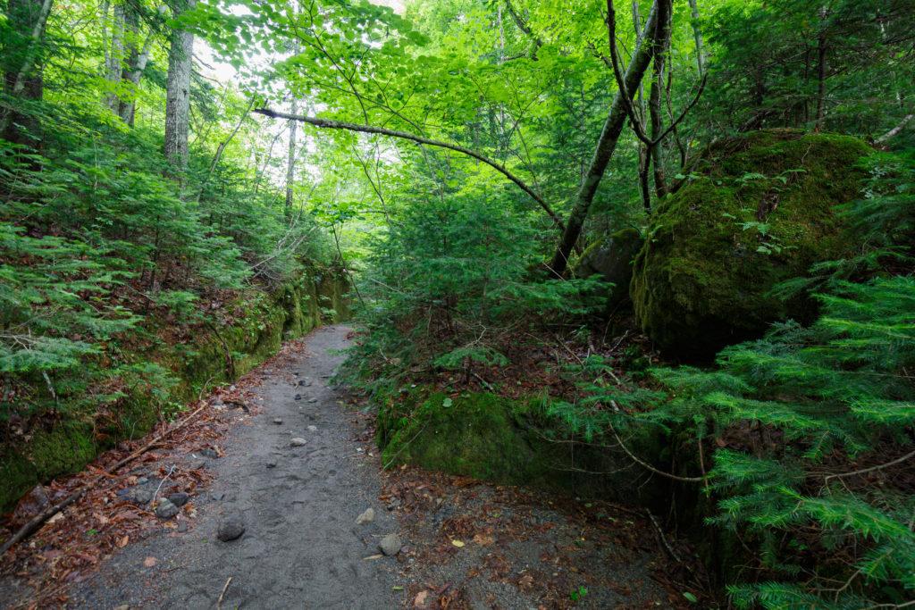苔の回廊入り口