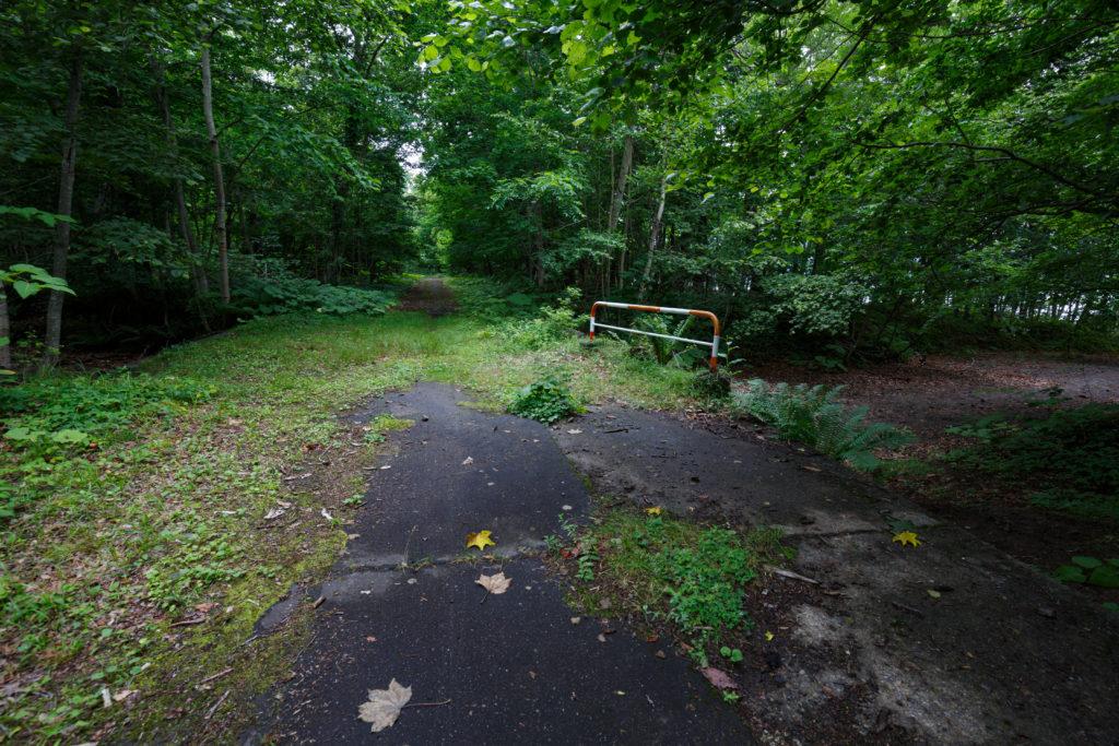 苔の回廊分岐
