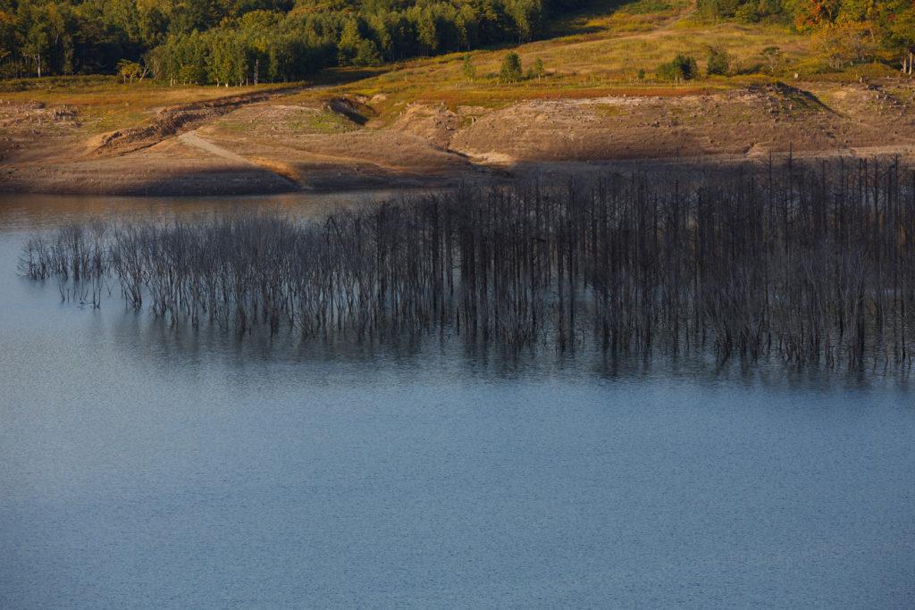 シューパロ湖の立ち枯れ