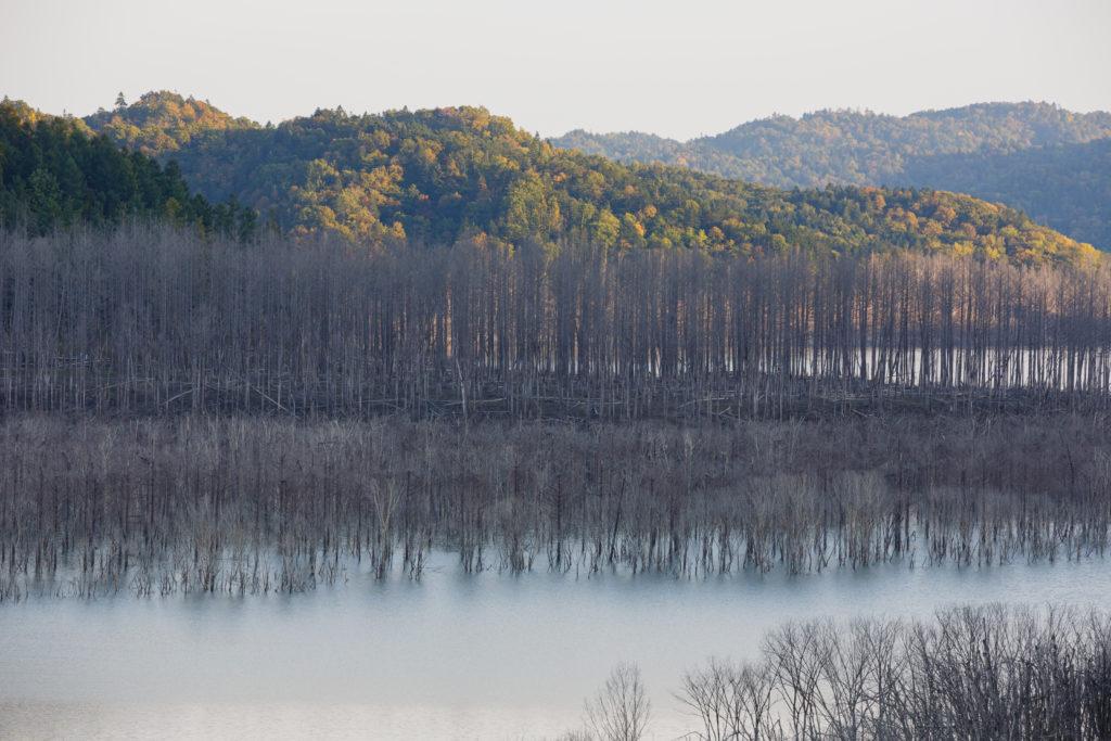 シューパロ湖の立ち枯れの木