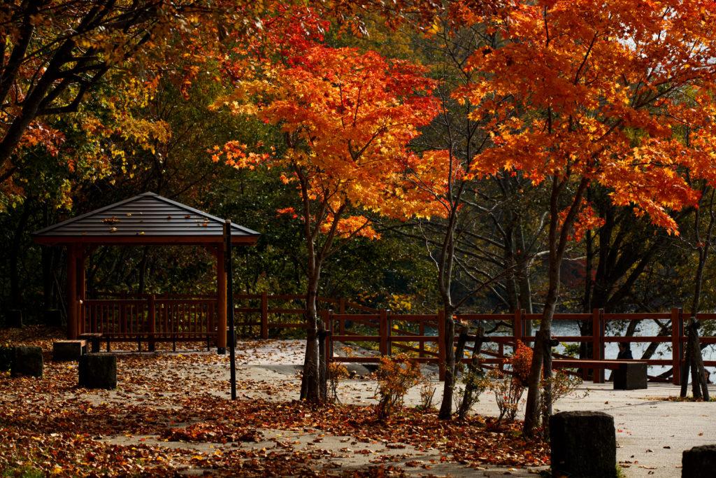 支笏湖の紅葉