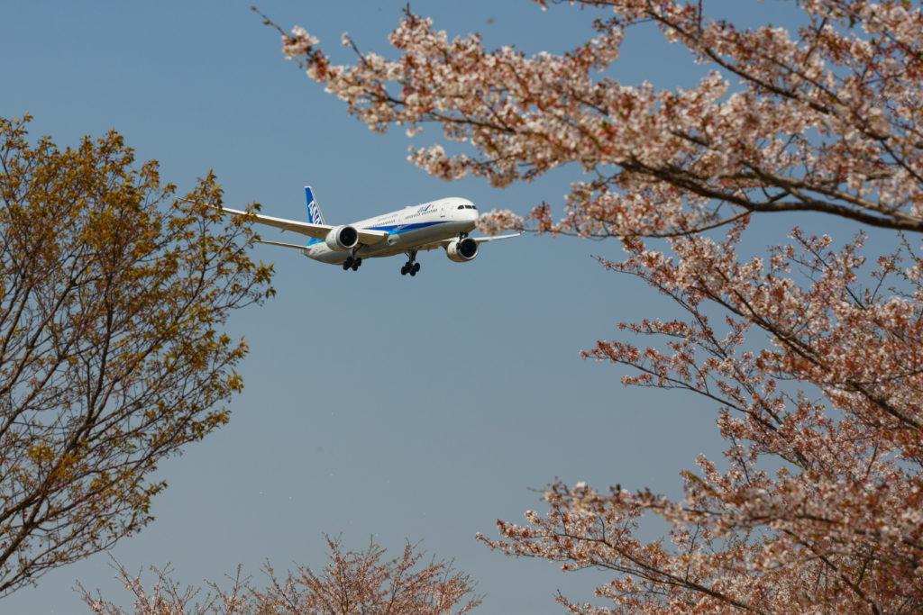 さくらの山の飛行機