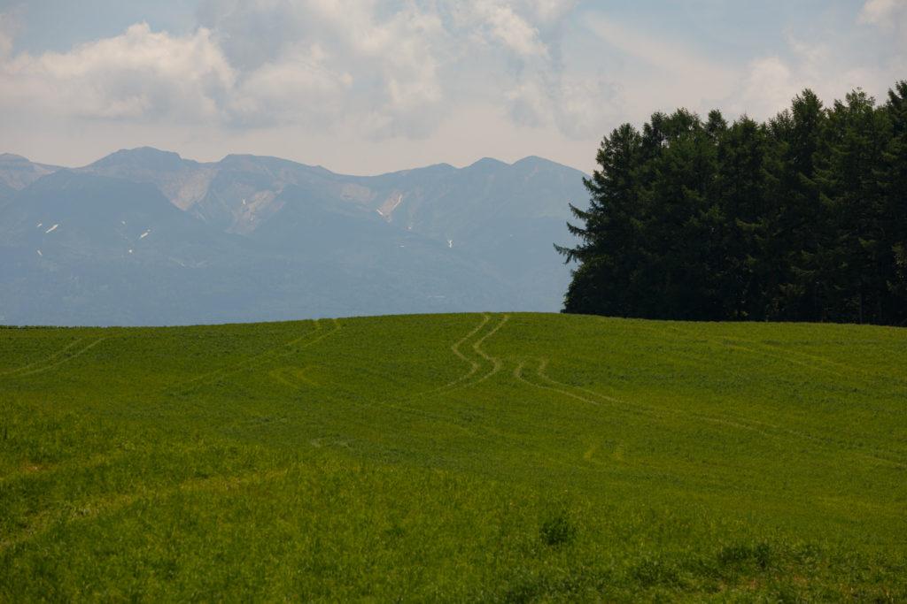 草原と大雪山と道