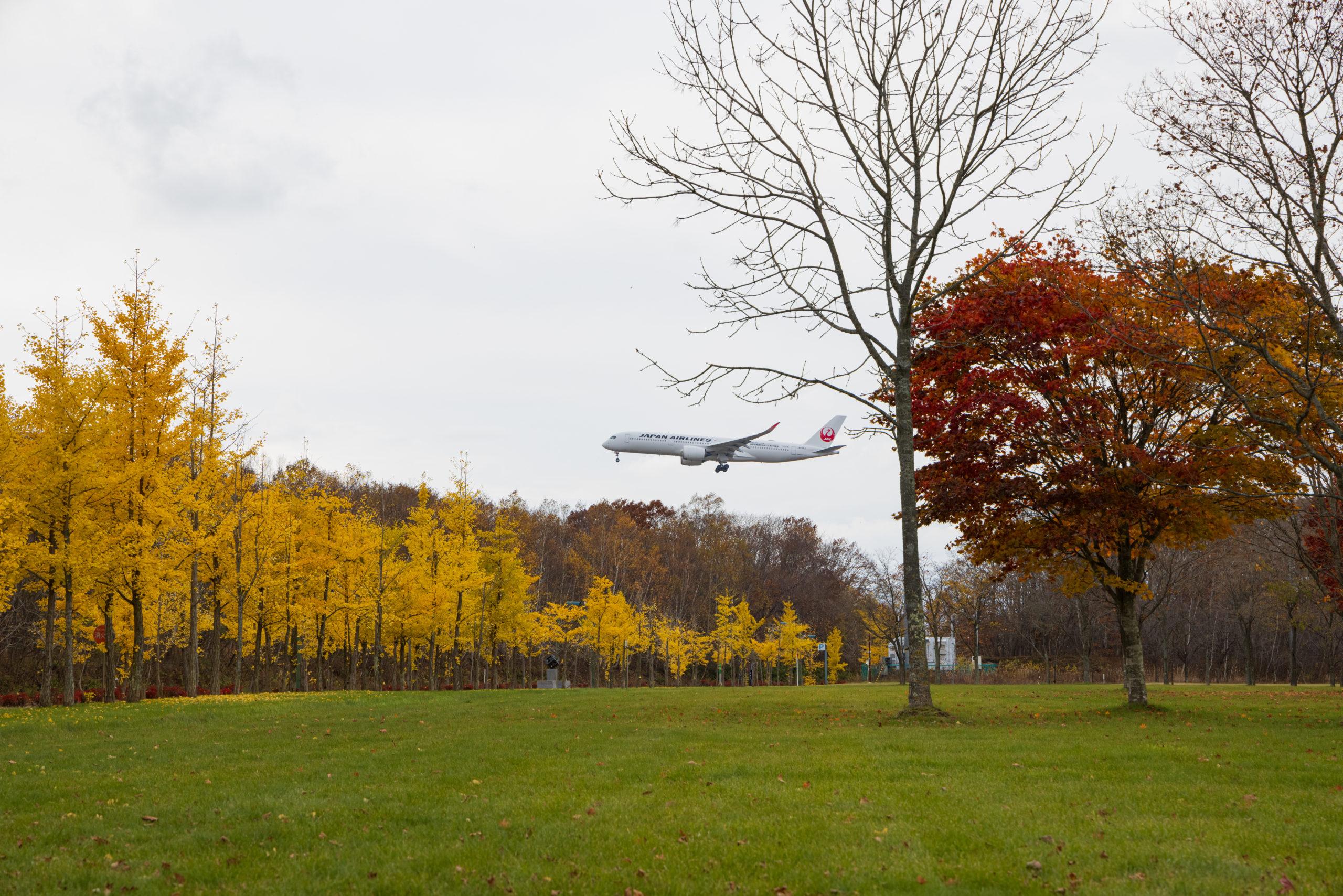銀杏の紅葉と飛行機