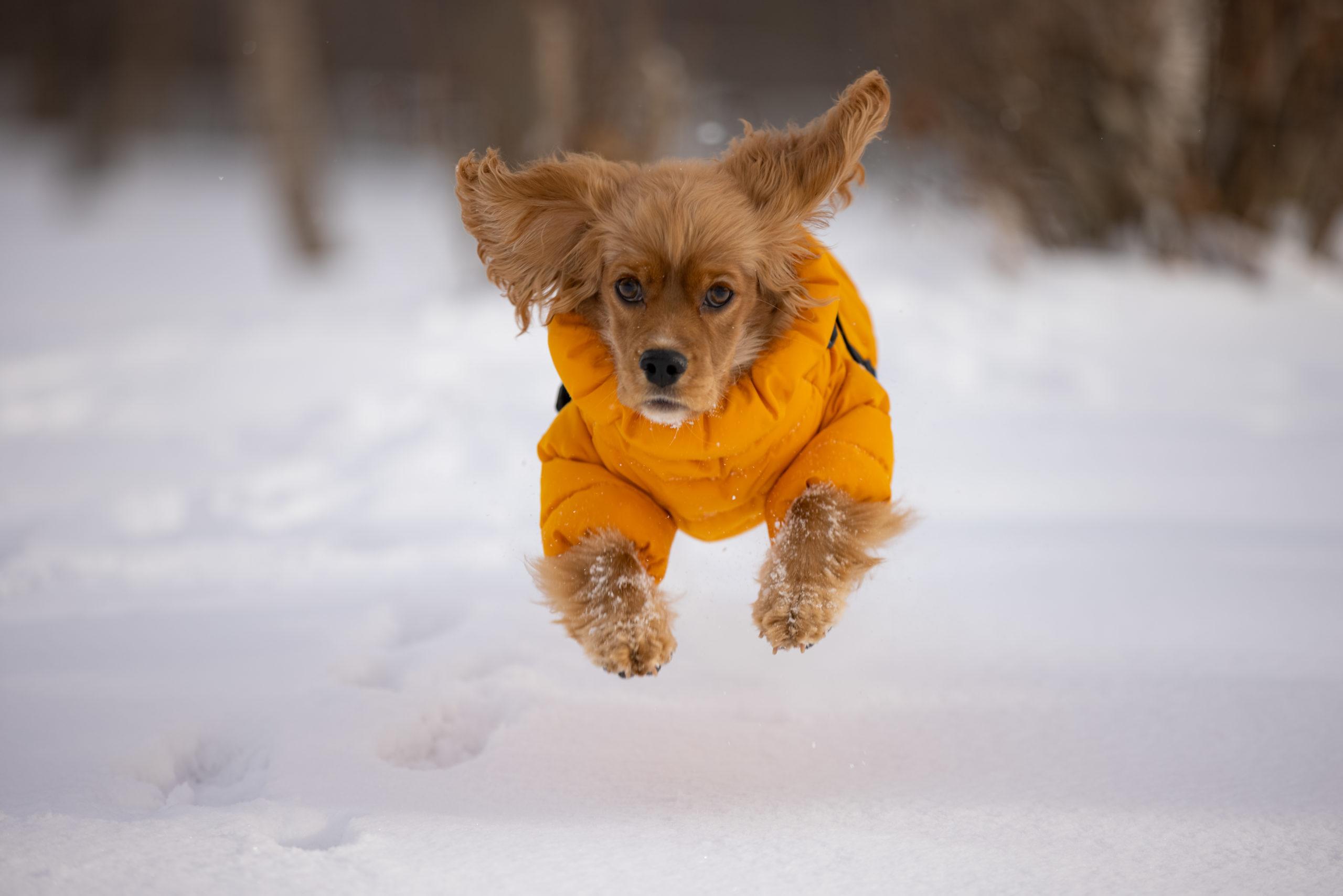 雪原を走るワンコ
