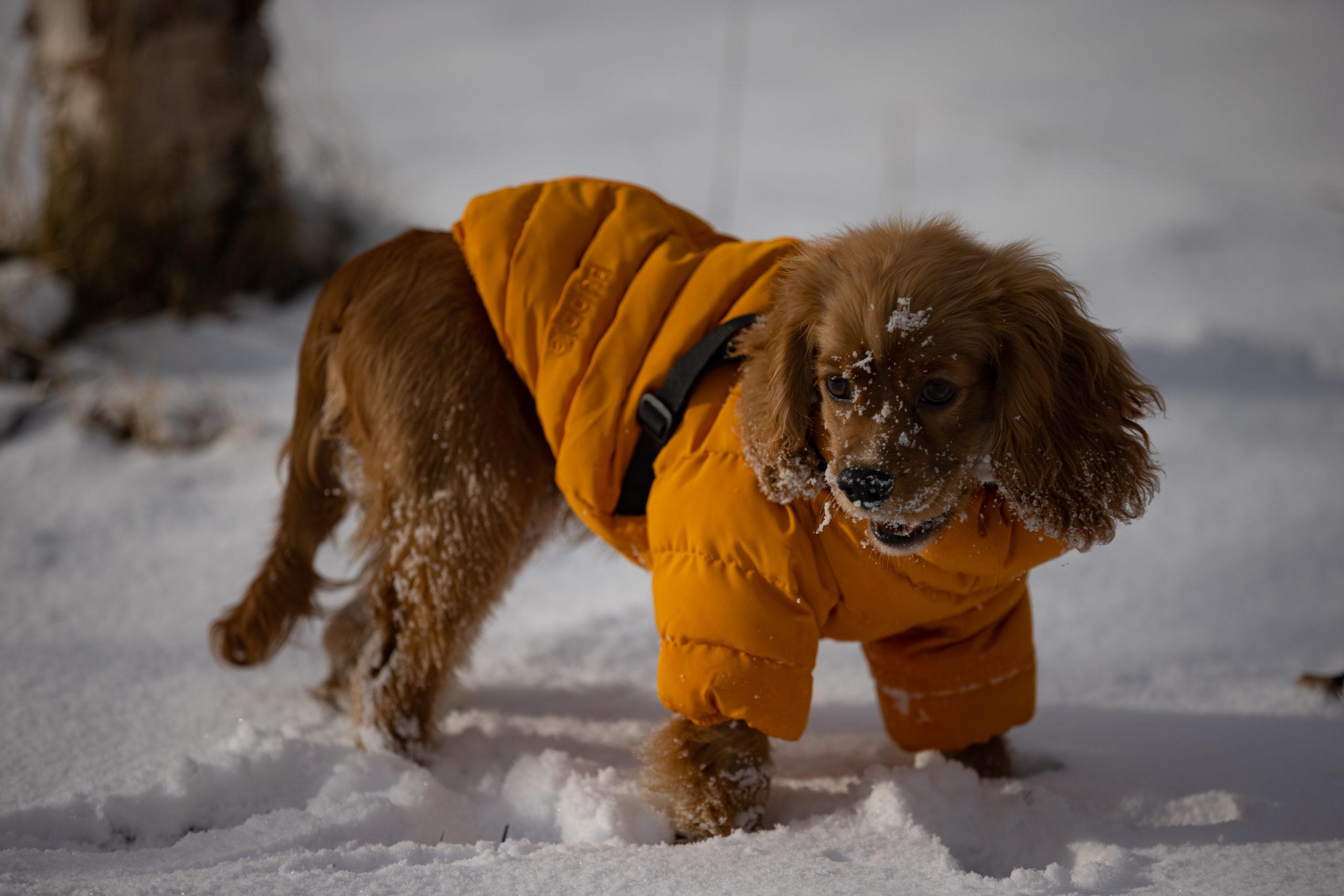 雪で遊ぶ犬
