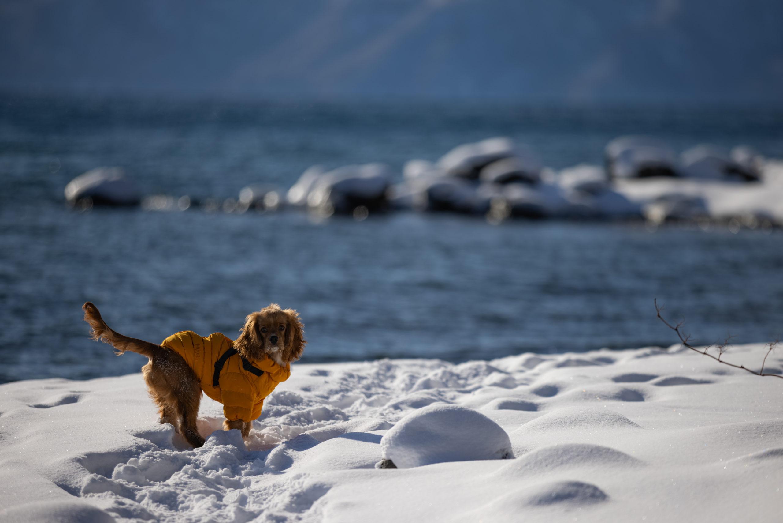 支笏湖と犬