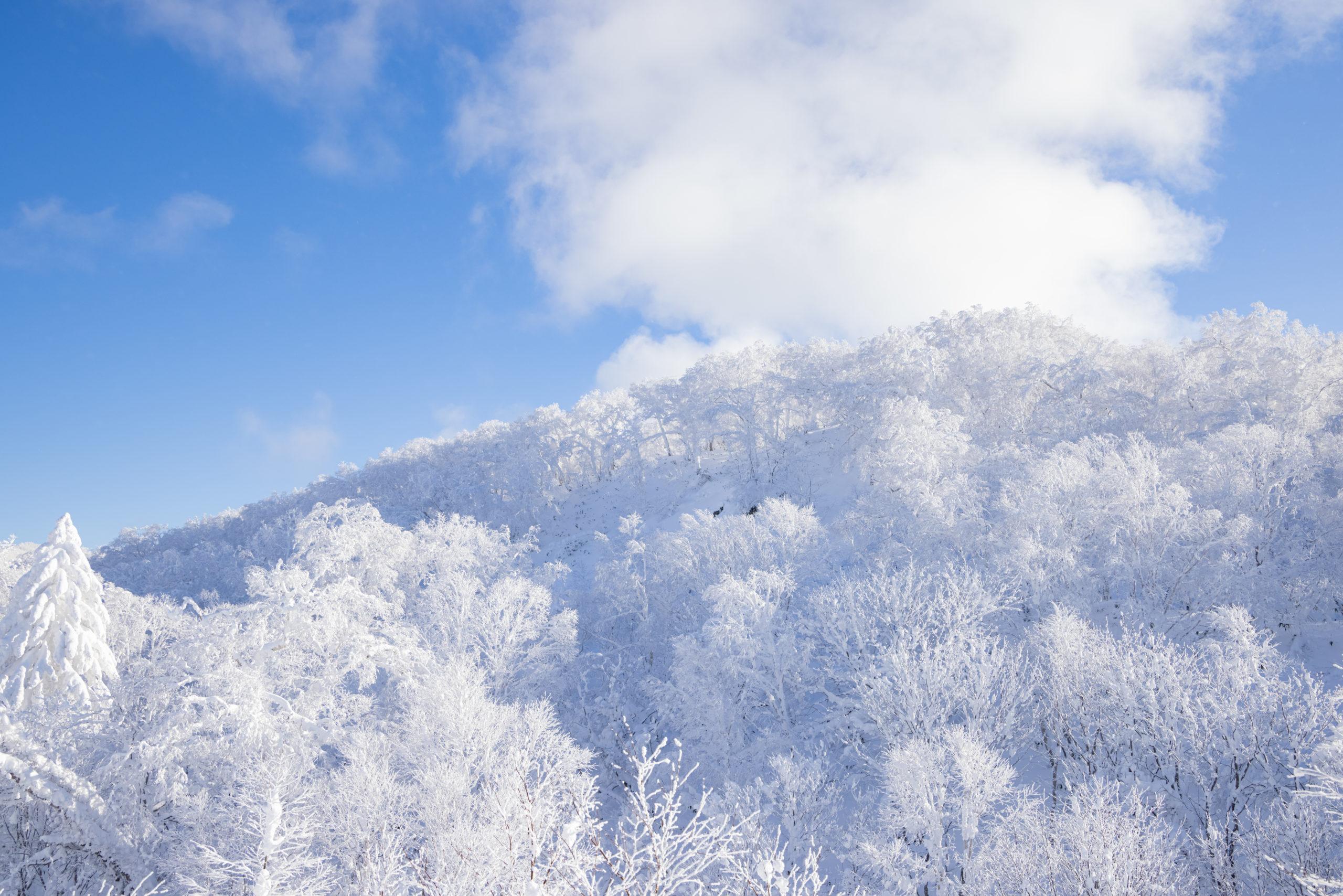 オロフレ峠の樹氷