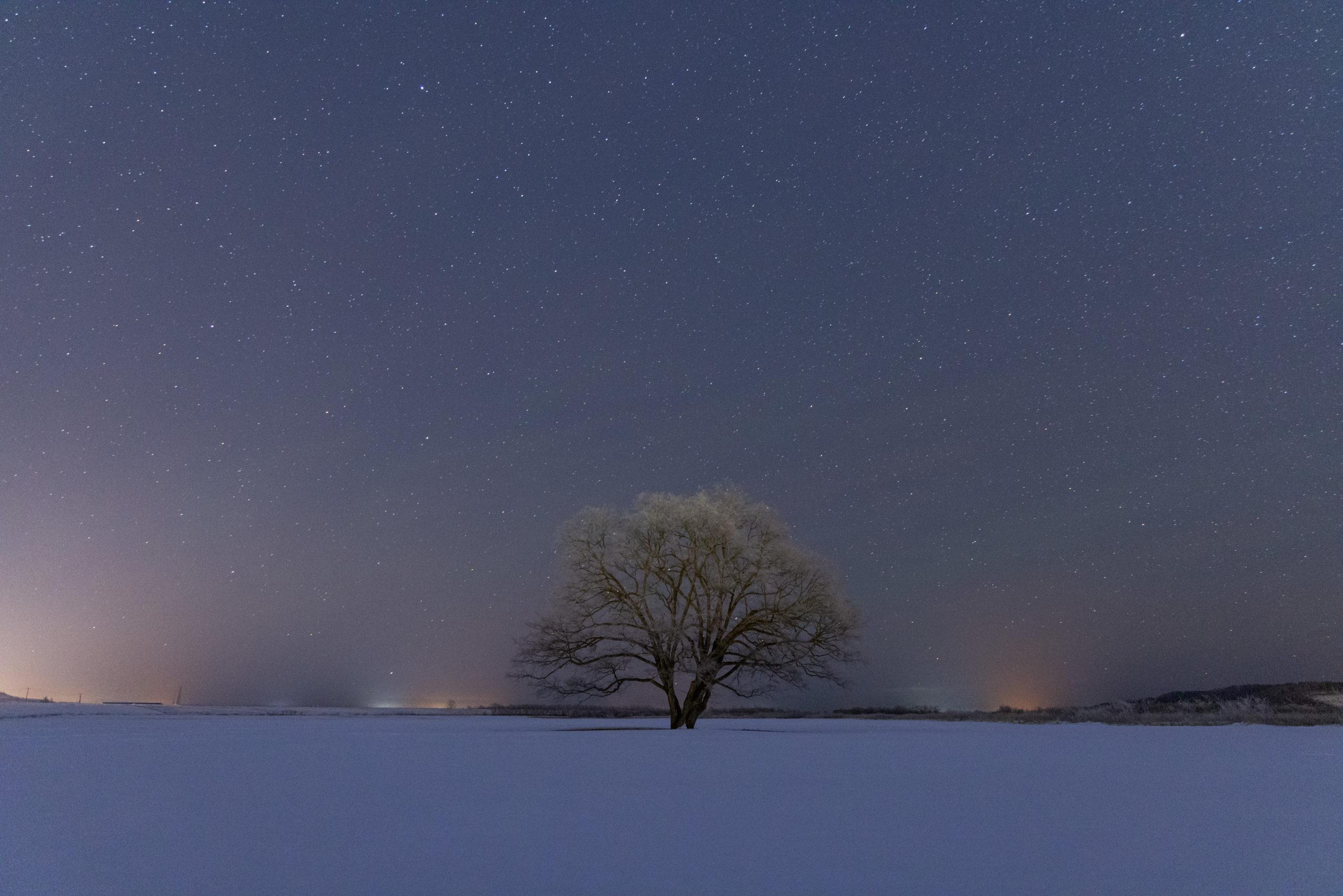 夜のはるにれの木