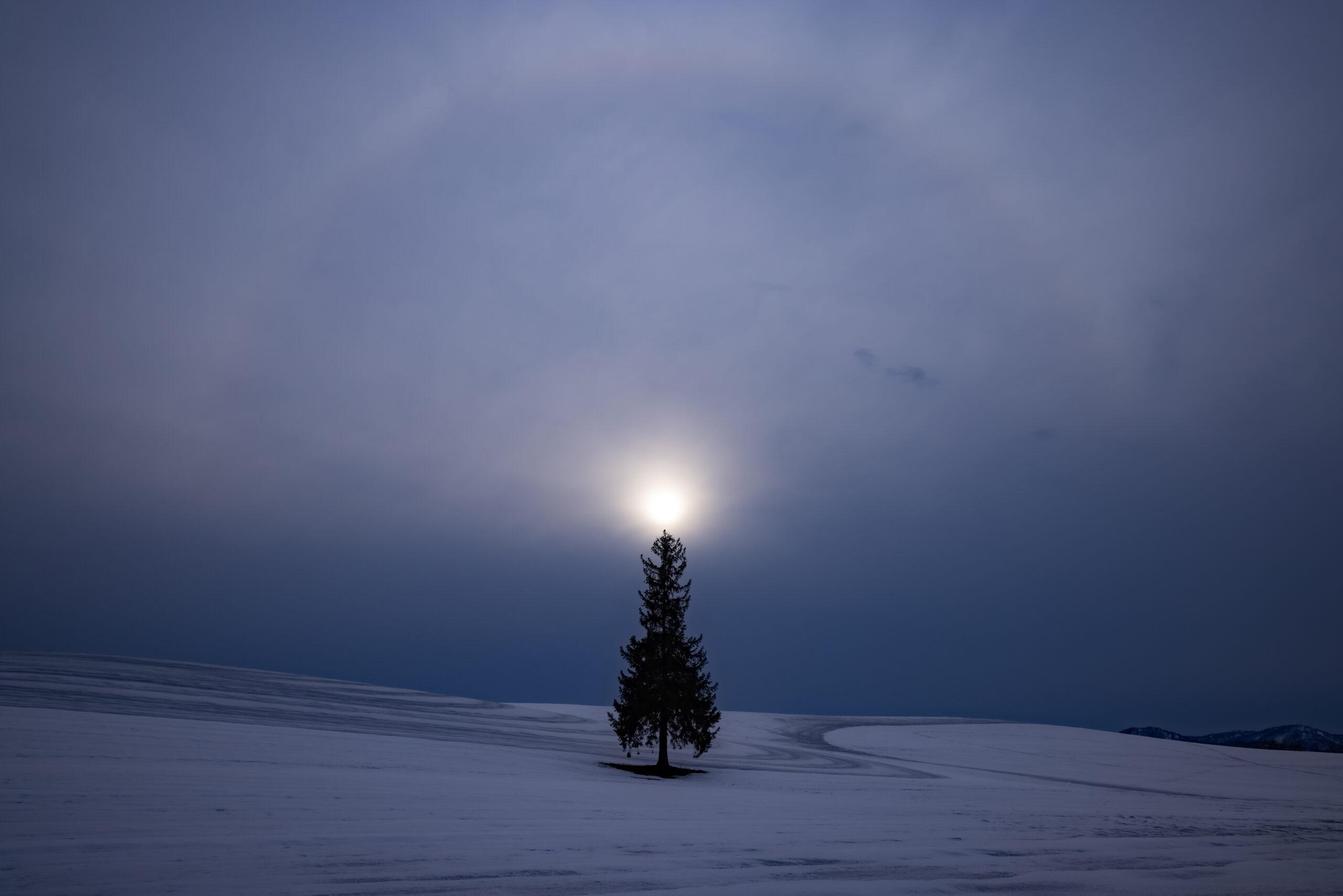 ハロとクリスマスツリーの木
