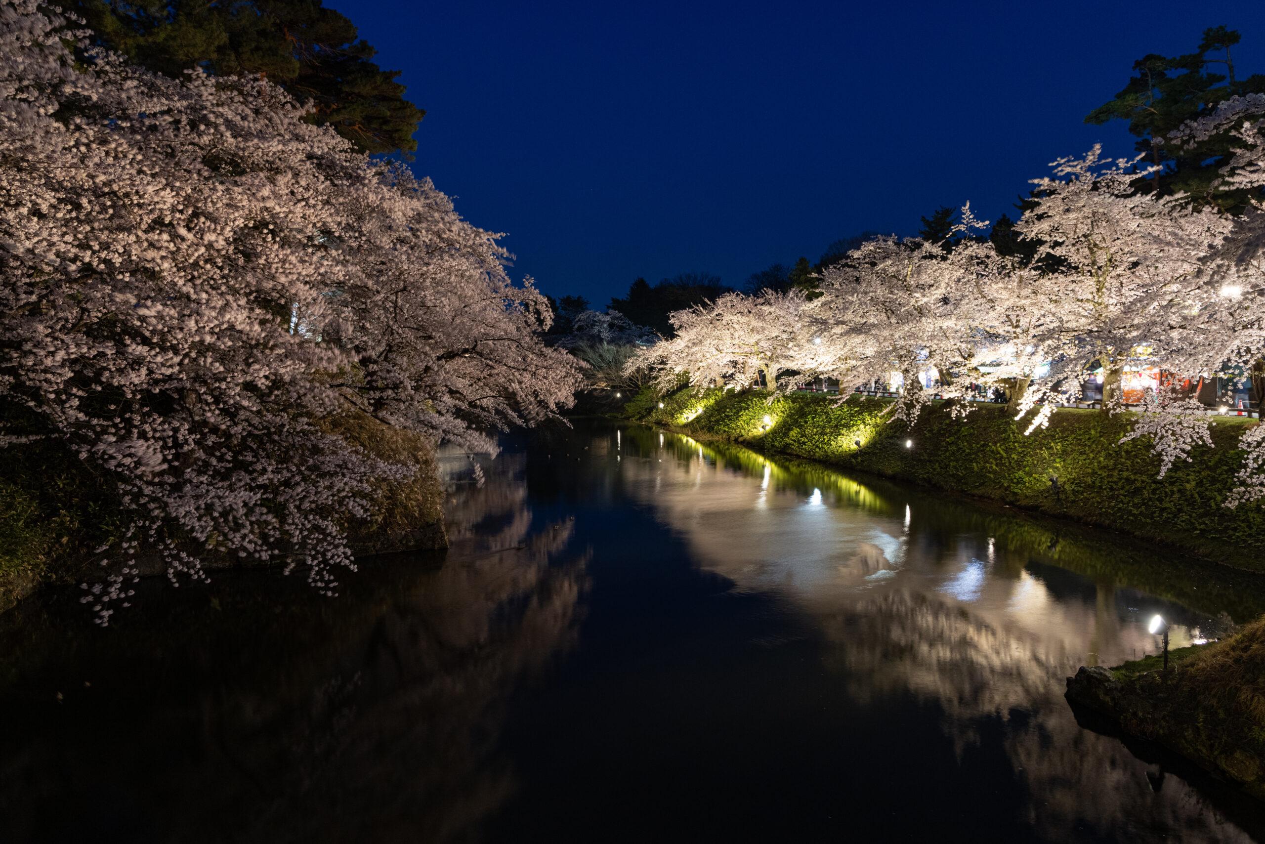 弘前城の桜