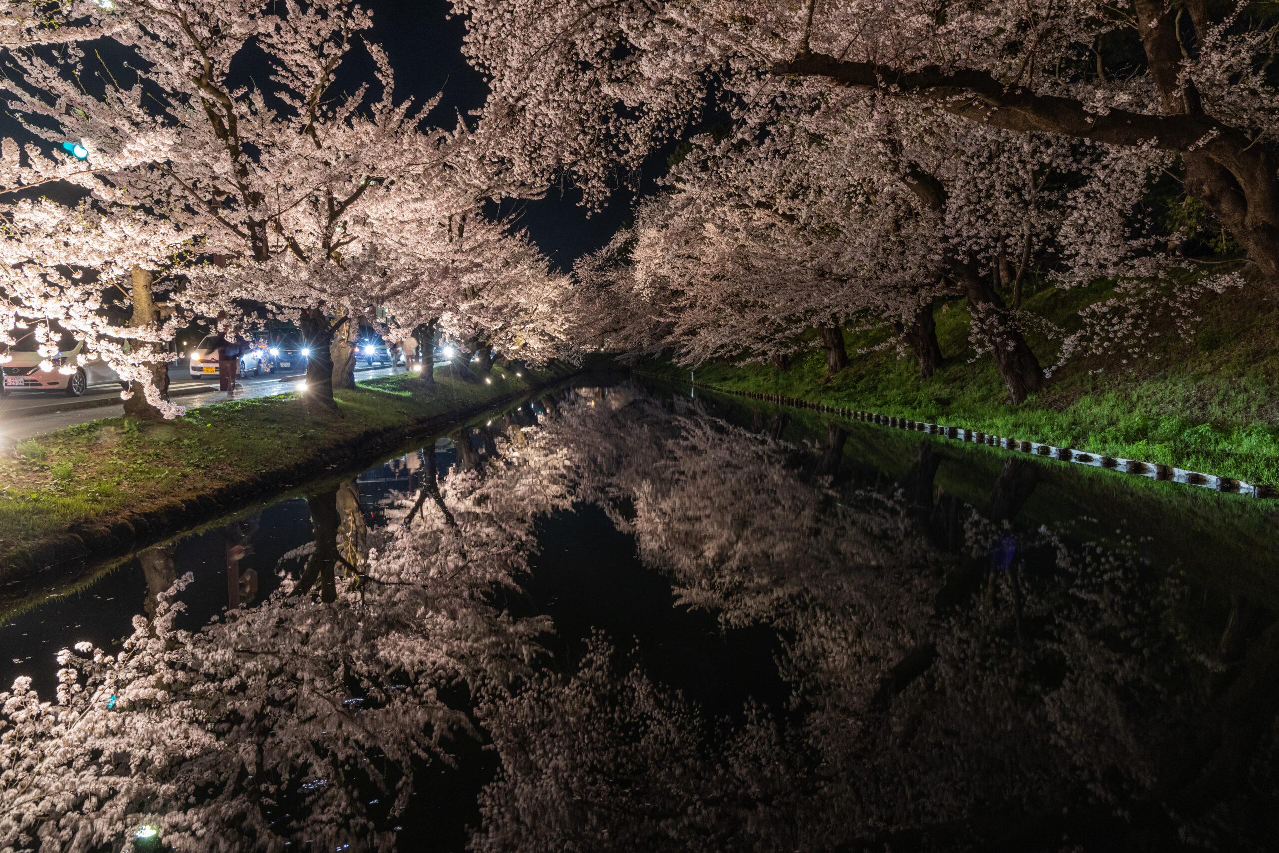 桜のリフレクション