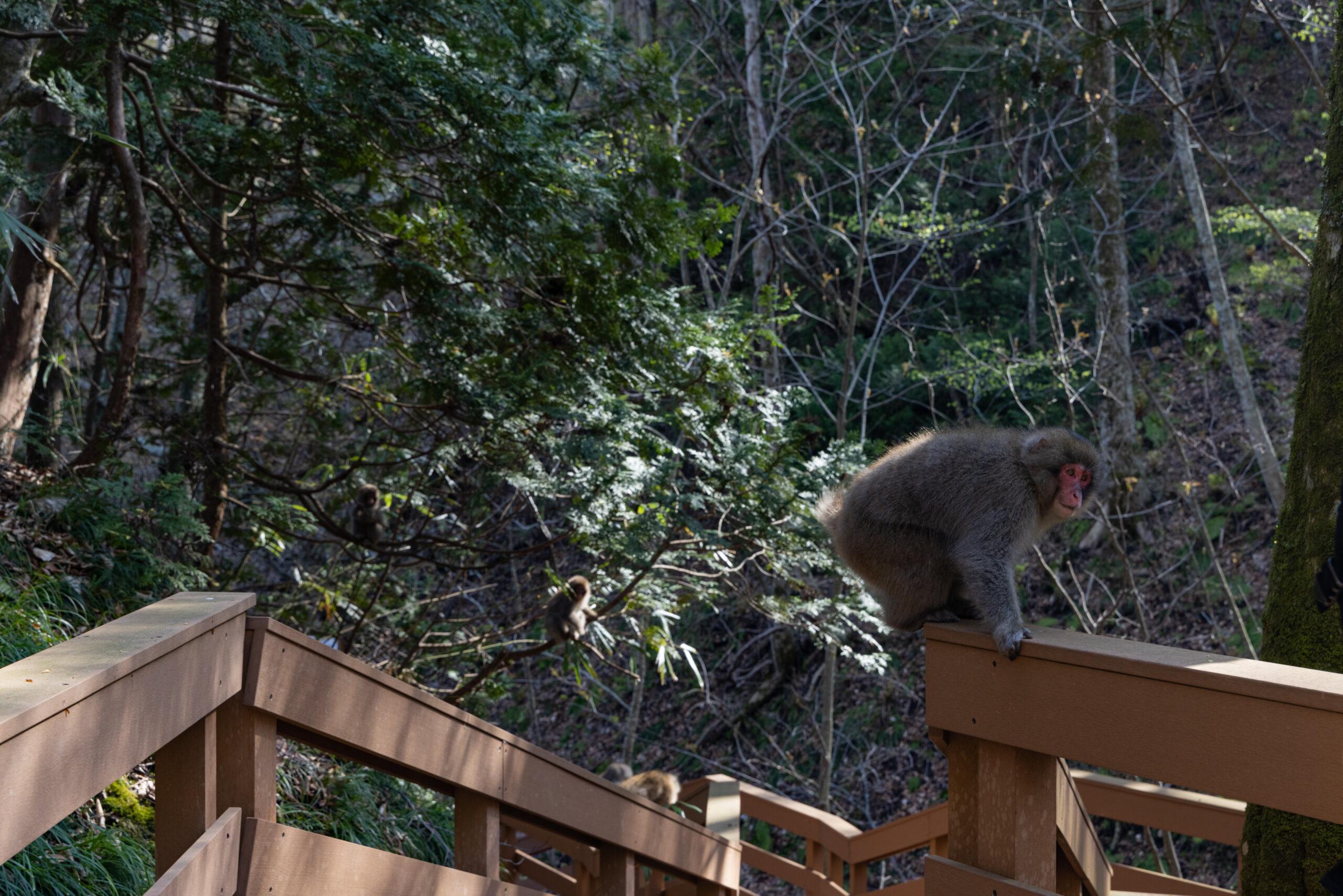 十二湖の猿