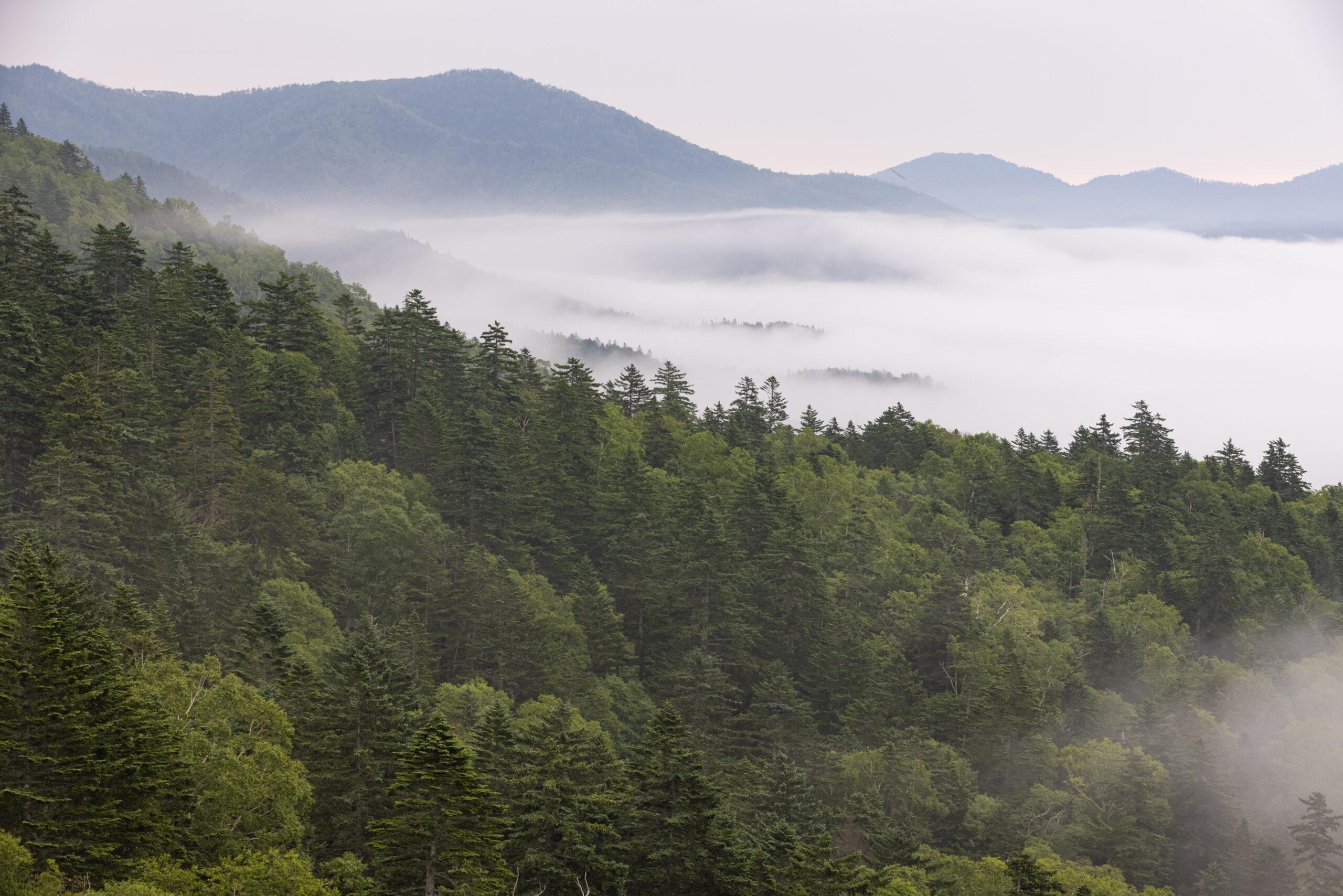 三国峠の雲海